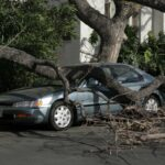 Car trapped under fallen tree after wind storm.